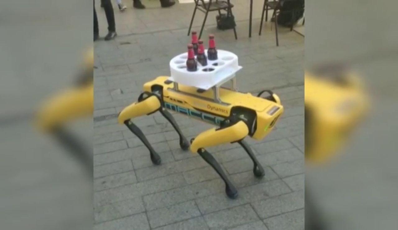 Un perro robot sorprende como camarero en un bar de Sevilla