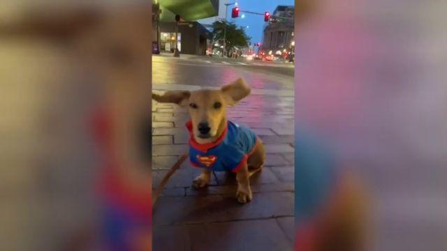 VÍDEO: Un perro a punto de salir volando con sus orejas agitándose por el viento se vuleve viral