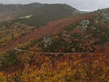 Un bosque para salvar a un pueblo