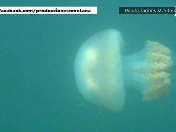La sorprendente imagen de una medusa gigante en la ría de Vigo