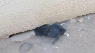 Encuentran una perra herida en la calle y se llevan la sorpresa de su vida cuando los lleva hasta debajo de una casa
