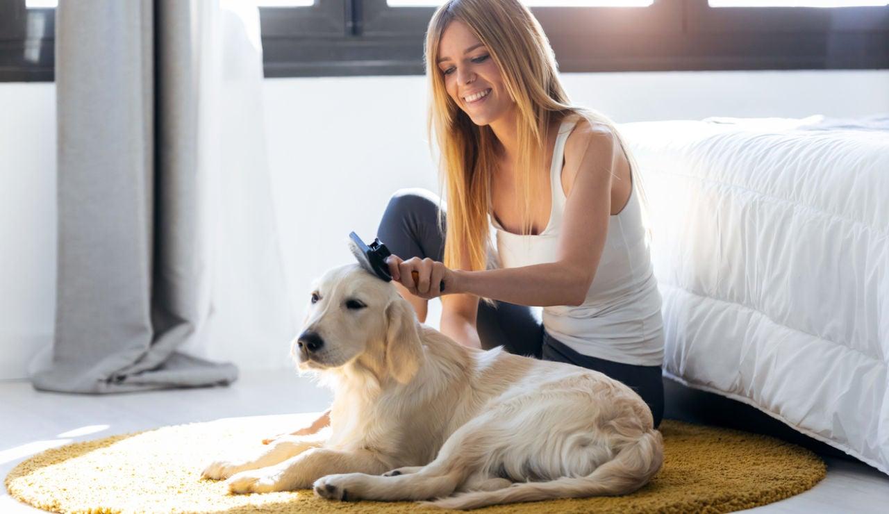 Cepillando al perro