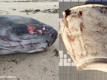 Muere un cachalote por culpa de plastico marino