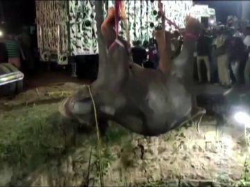 Rescate elefante