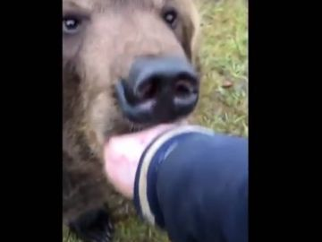 Mete su mano en la boca de un oso