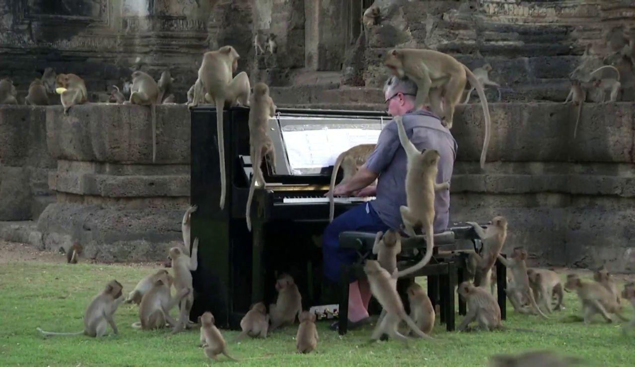 'Para Elisa' a los monos