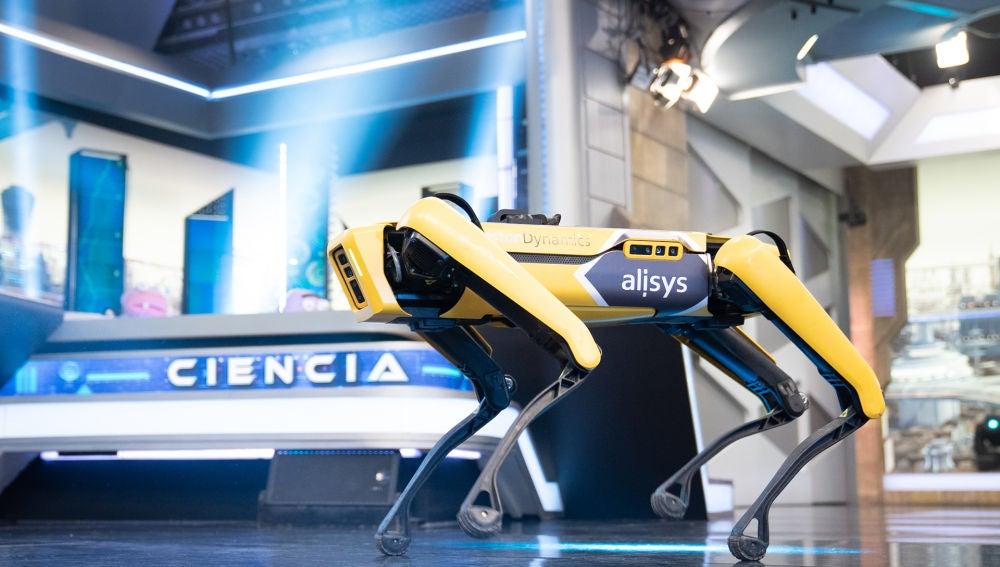 De los obstáculos imposibles a la 'performance' de baile: Los impresionantes perros robóticos de Marron capaces de todo