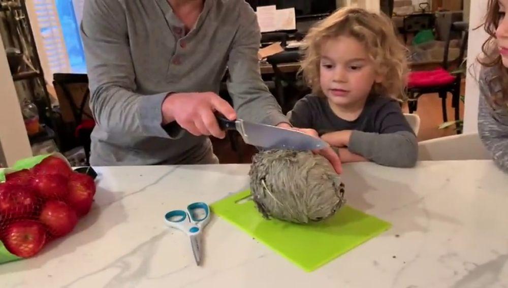 VÍDEO: Abré un nido de avispas por la mitad y esto es lo que se encuentra