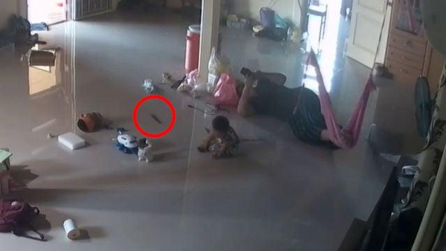 Una madre evita en el último segundo que un ciempiés venenoso gigante muerda a su bebé