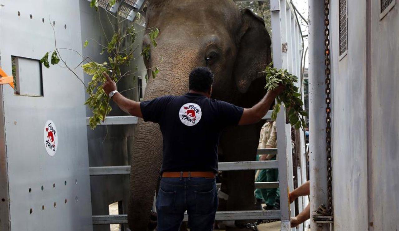 Elefante Kavaan