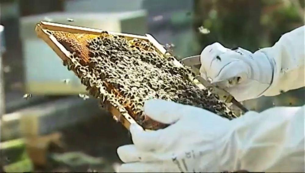 Cambia la crisis hotelera por un proyecto más dulce de apadrinamiento de colmenas de abejas