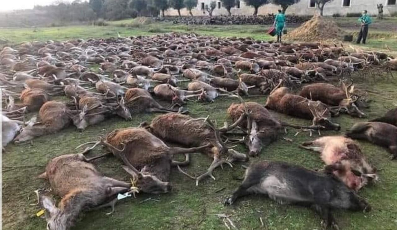 Imagen de la montería en Portugal