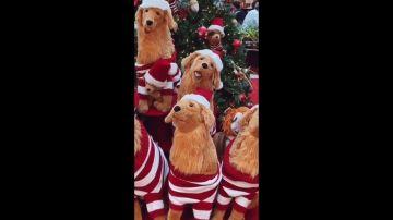 Reto navideño: ¿Eres capaz de encontrar el perro real?