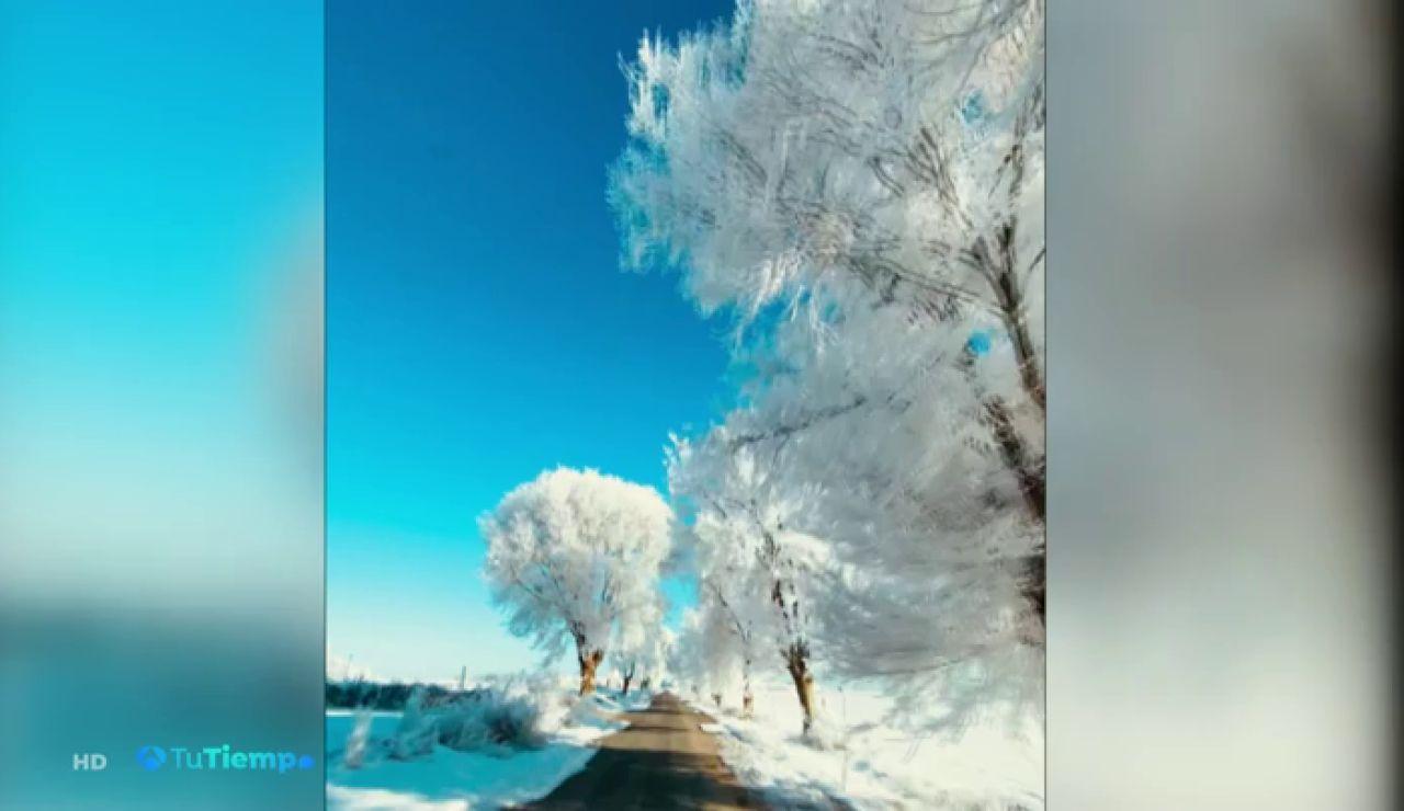 La asombrosa cencellada grabada en Albacete a 16 grados bajo cero