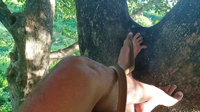 Un excursionista se queda helado cuando una serpiente empieza a deslizarse por su pierna