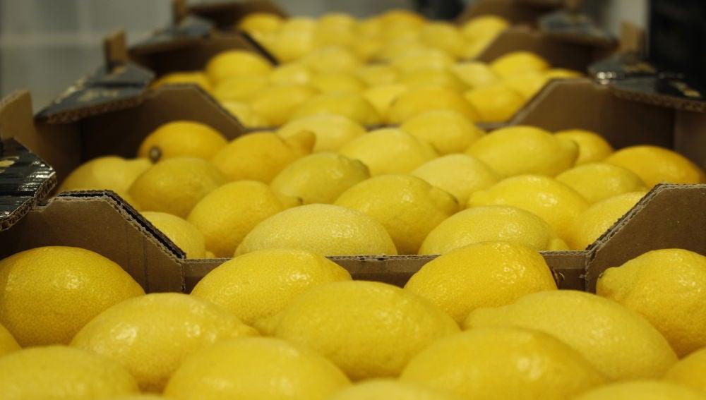 El limón europeo, la garantía de un líder en producción y exportación
