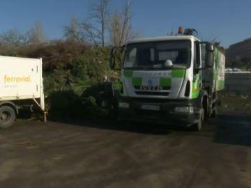 ¿Qué pasa ahora con los restos de los árboles caídos en Madrid por el temporal Filomena?