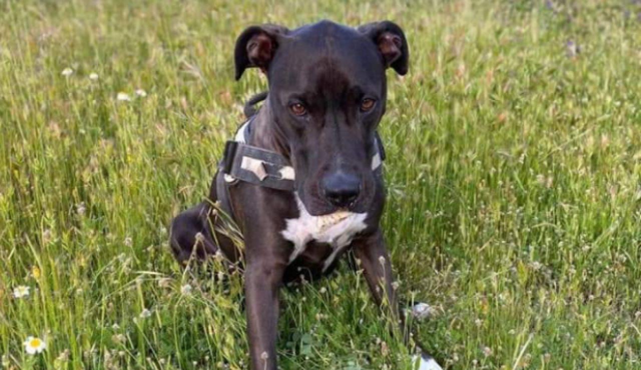 Fotografía de Brutus, perro que ha desaparecido tras la explosión en Puerta de Toledo