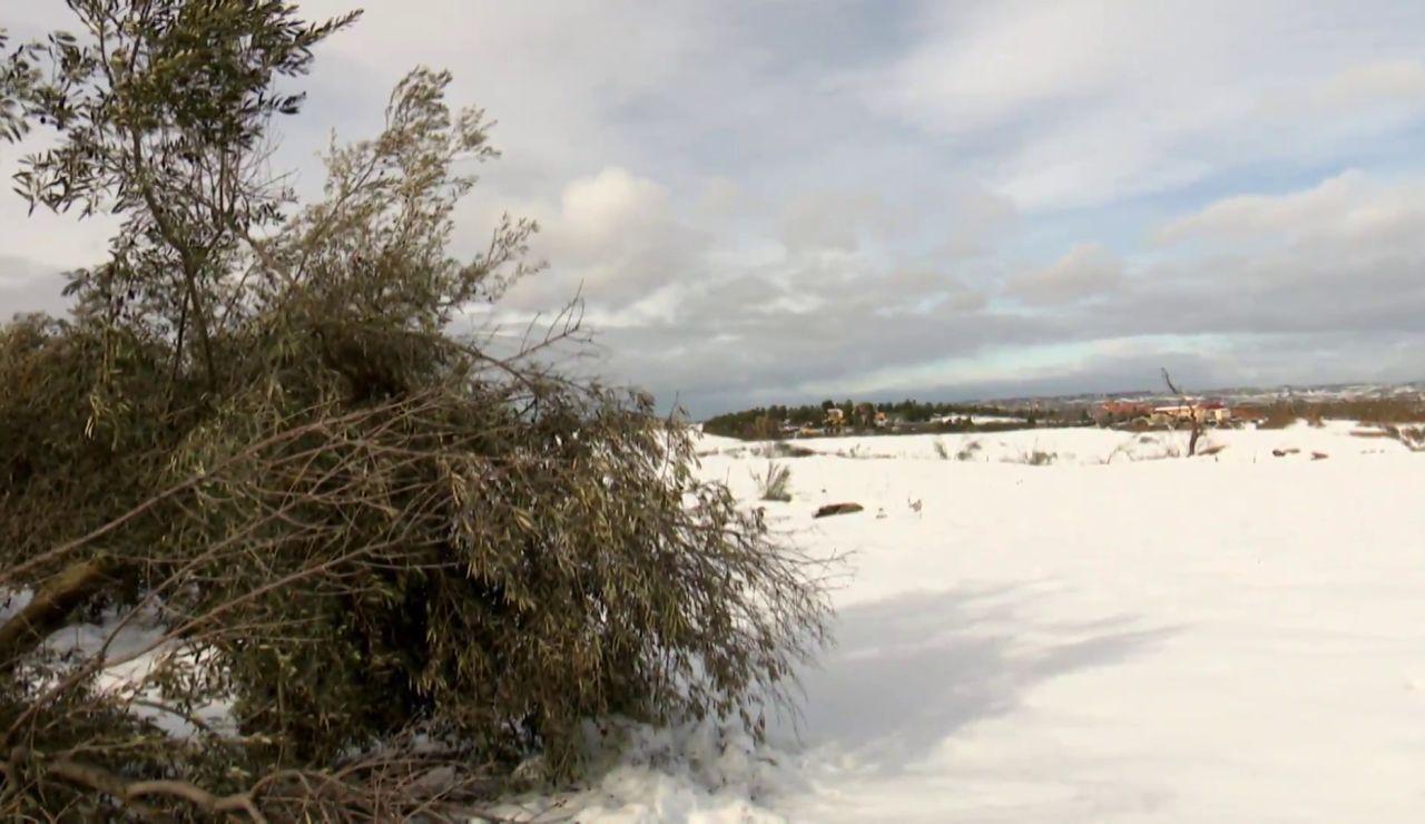 El campo sigue sufriendo los efectos de Filomena tres semanas después