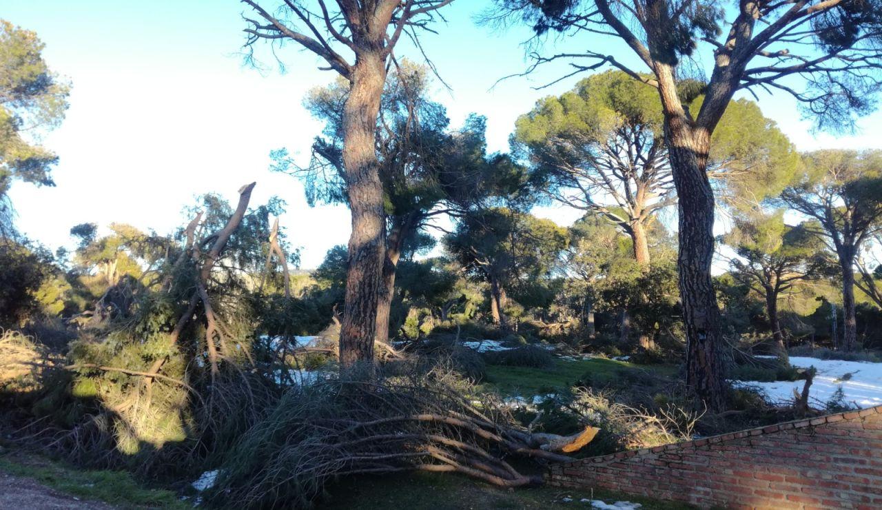 Fuertes vientos en Madrid hoy