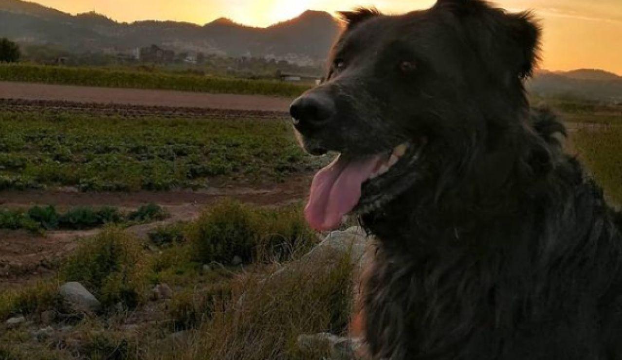 Un perro muere a manos de un cazador en Torrelles de Llobregat, Barcelona