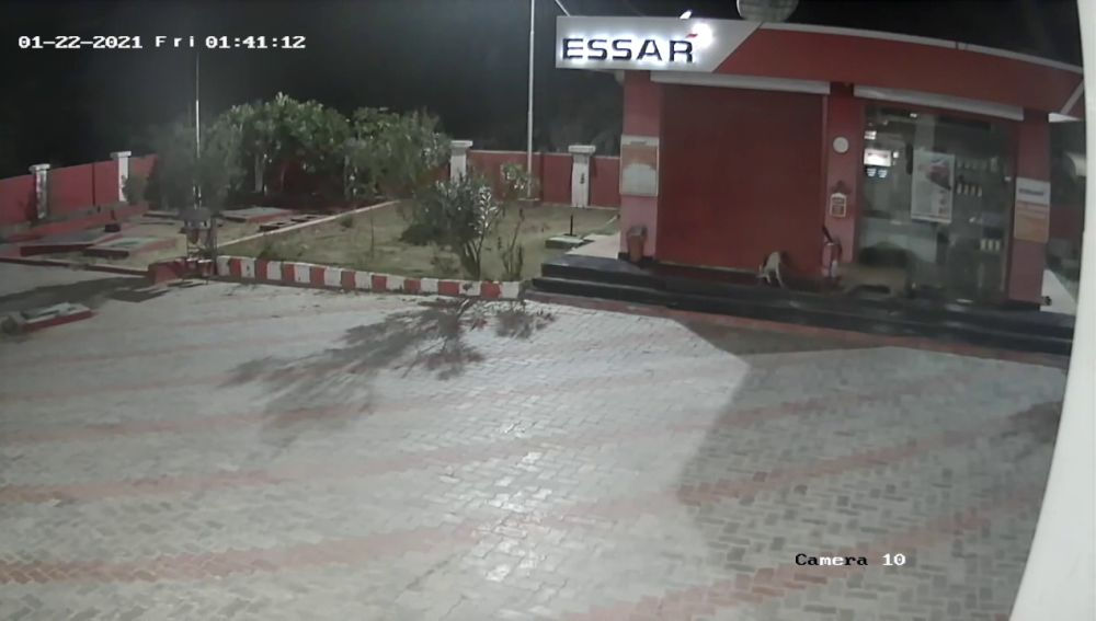 Una cámara de seguridad grabá el momento extraordinario en el que un perro lucha contra un leopardo salvaje