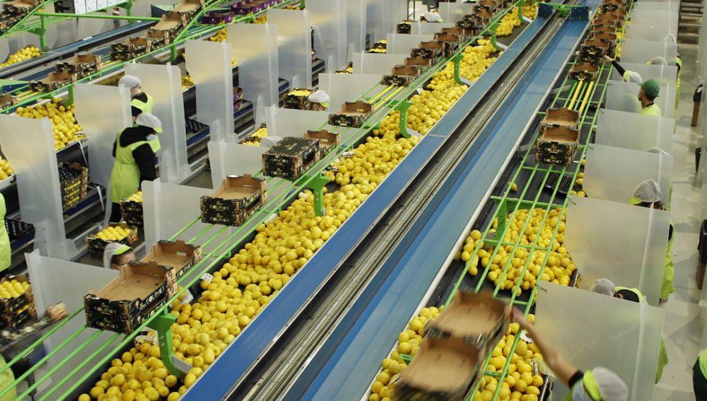 El limón europeo es un producto de proximidad
