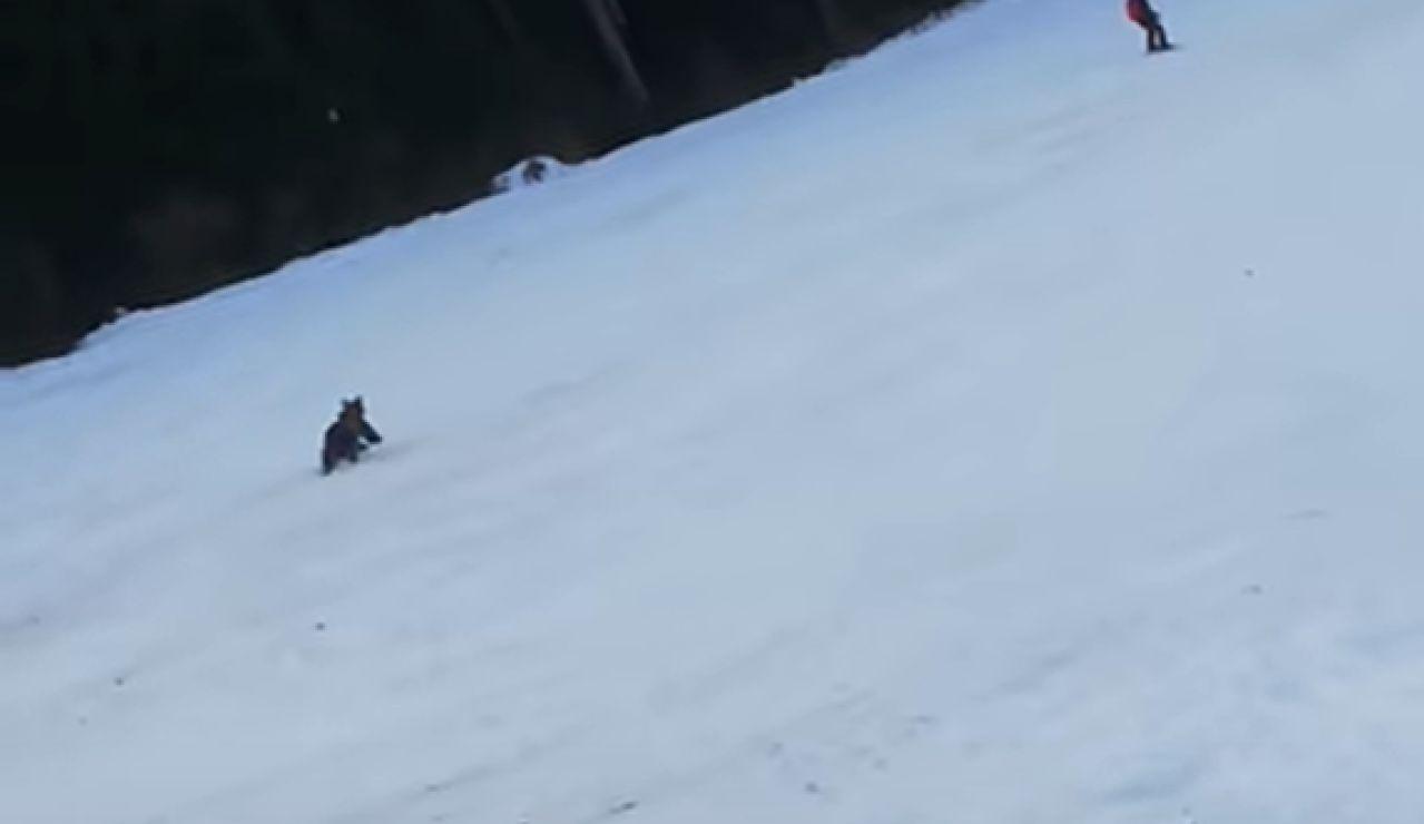 Graban a un esquiador huyendo de un oso en pleno descenso por una pista de esquí