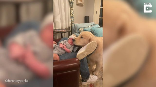 VÍDEO: Un perro adora al bebé de sus dueños y no se separá de él