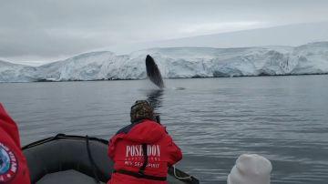 VÍDEO: Una ballena gigante salta fuera del agua junto a una lancha