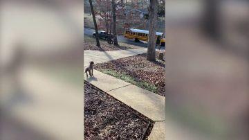 El adorable momento en que un perrito espera a que su dueño de 5 años vuelva del colegio