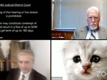 Filtro gato videoconferencia
