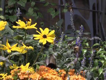 El cambio climático adelanta la temporada de alergia al polen en Estados Unidos