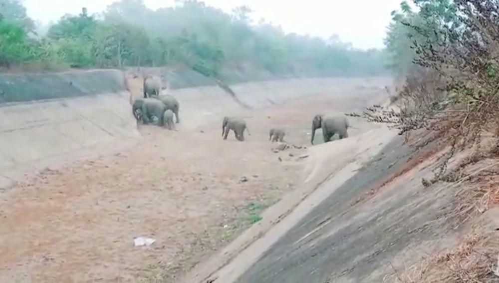 Observa a una manada 50 elefantes cruzar un canal seco en el este de la India
