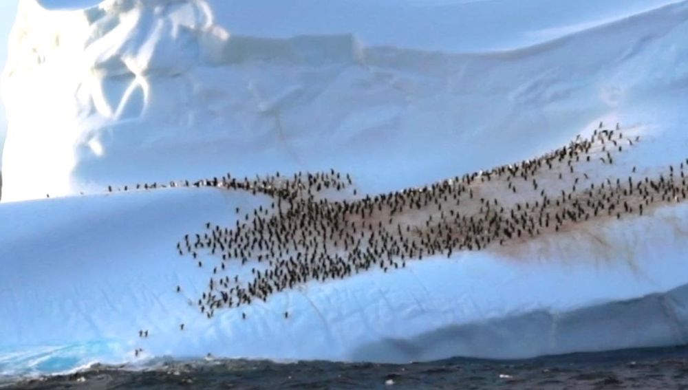 Pingüinos en un iceberg
