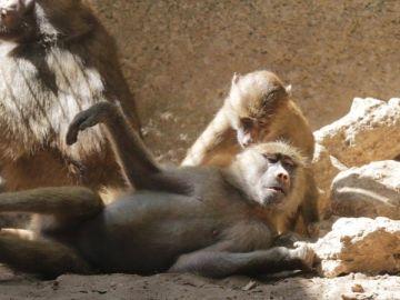 Un animal de Zoo de Castellar de la Frontera