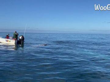 VÍDEO: Un grupo de ballenas inspecciona una barca frente a la costa de México
