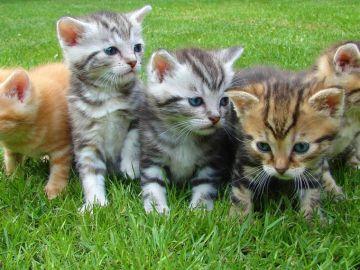 ¿Por qué el Día del Gato se celebra el 20 de febrero, el 8 de agosto y el 29 de octubre?