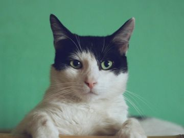 Gato (archivo)