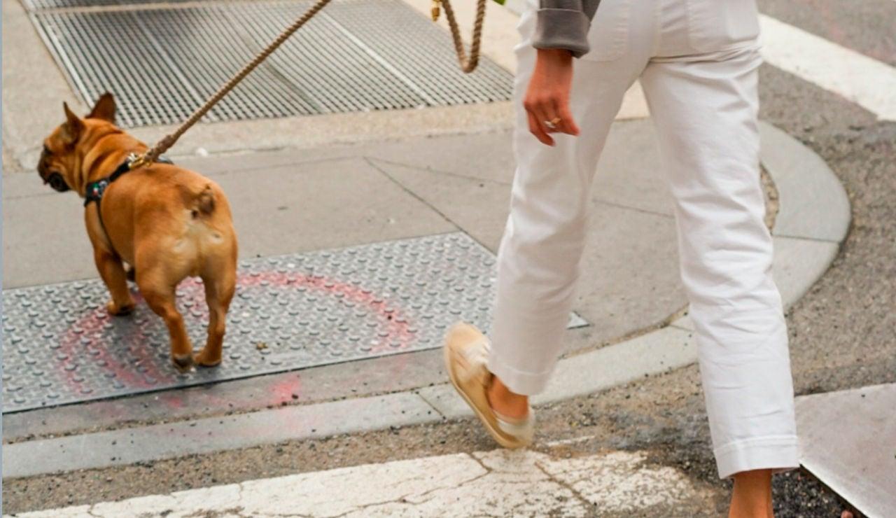 Un perro paseando por la calle (Archivo)