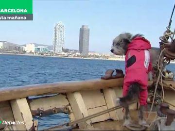Nirvana, la perrita marinera que avista ballenas junto a Sergi Basolí en Barcelona