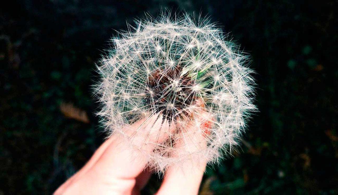 Consulta los niveles de polen en tu zona