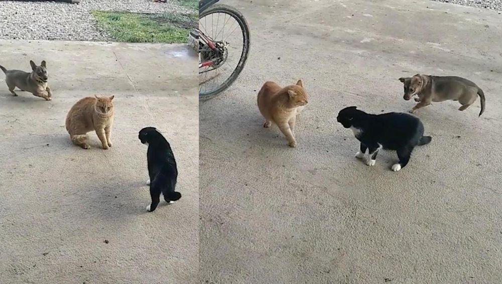 Un perro alrededor de dos gatos discutiendo