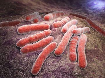 bacterias infecciosas de tuberculosis
