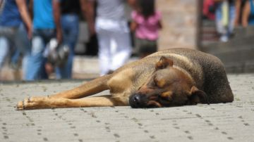 Perro abandonado (archivo)