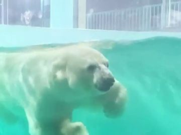 Inauguran un polémico hotel en China que exhibe un oso polar para que los clientes lo contemplen