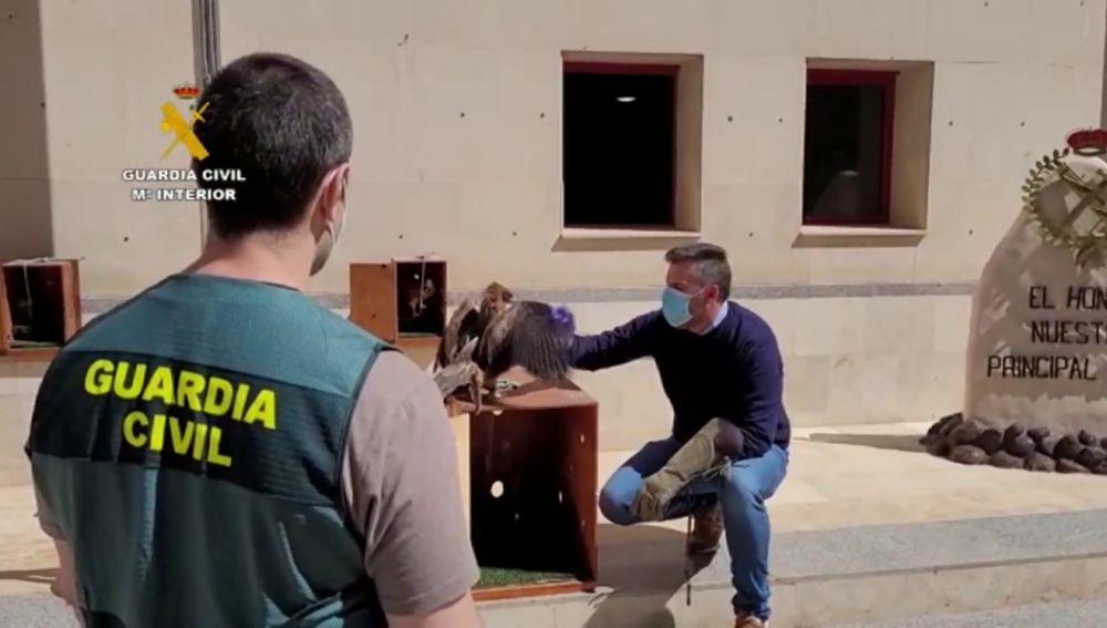 La Guardia Civil rescata a decenas de aves rapaces secuestradas en Melilla