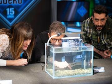 ¡Animales transparentes! Marron sorprende con las especies más raras de la naturaleza