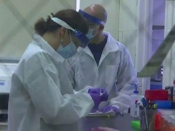 """Un estudio concluye que las """"células T asesinas"""" pueden ayudar a prevenir una enfermedad grave del coronavirus"""