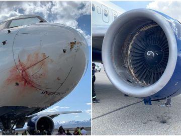Los jugadores de Utah Jazz, obligados a aterrizar de emergencia tras chocar el avión con una bandada de pájaros